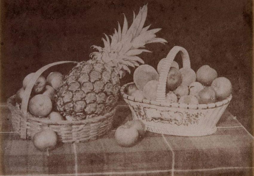talbot-fruits