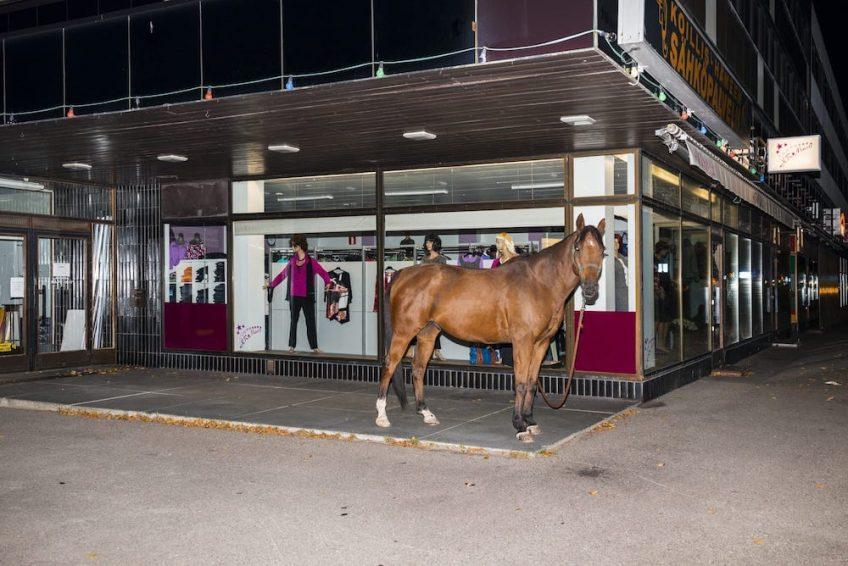 horse_75x50cm