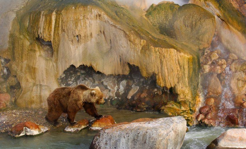 Медведь в Долине гейзеров Игорь Шпиленок